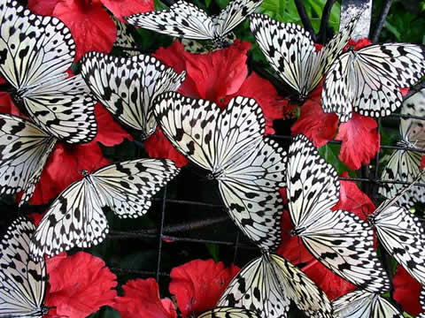 A group of butterflies